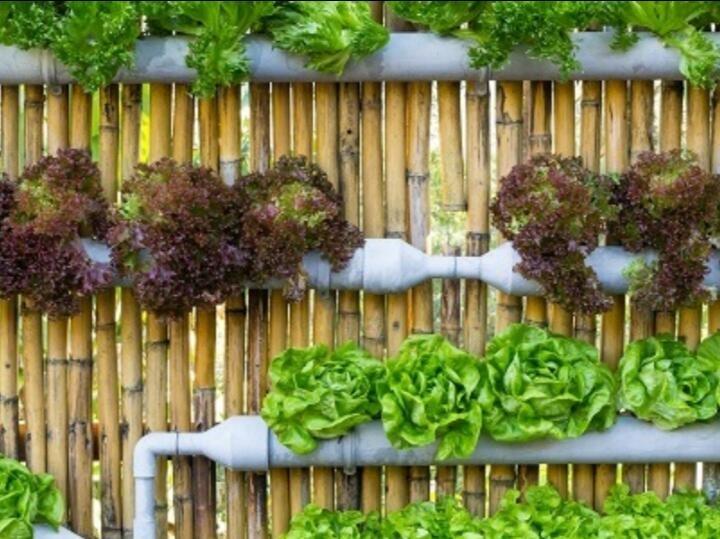 الزراعة: حاجة وطنية.. جهاد وإرادة توافقية - وفاء ناصر