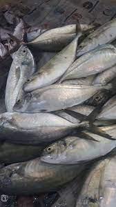 صور.. البحر للفقراء والأسماك للأغنياء!