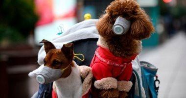 نوع غير مألوف من كورونا ينتقل للإنسان عبر الكلاب