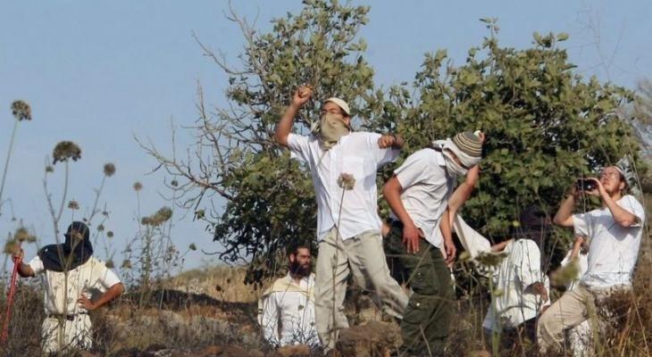"""مستوطنون يعتدون على فريق هيئة تسوية الأراضي ويستولون على جهاز """"GPS"""" جنوب الخليل"""