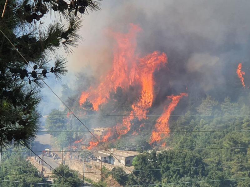 جهود لاهماد حريق غابة المرغان الصنوبرية في القبيات